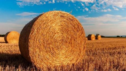 Саратовским сельхозпредприятиям выдали кредитов на 13,3 млрд рублей