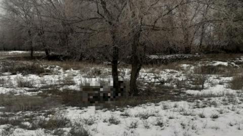 Труп пенсионерки обнаружен в Новоузенском районе