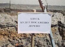 На проспекте Кирова высаживают каштаны