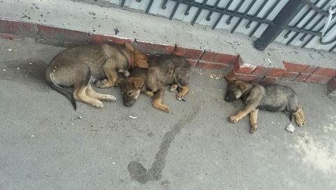 После замечания Володина правительство занялось бездомными животными