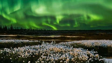 В Сбербанк Онлайн появились открытки с фотографиями природы от Русского географического общества