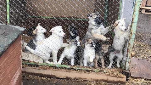 Михаил Исаев приведет приют для собак в порядок