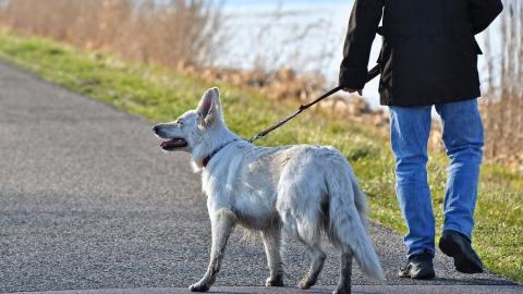 Собака погибла из-за пешехода-нарушителя