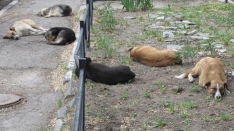 Саратовцам разрешили устраивать собачьи приюты