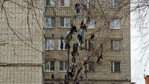 Соцсети гадают, почему на дереве висит одежда