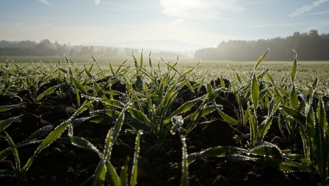 Аномально теплая зима не угрожает урожаю