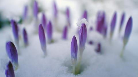 Снег выпадет при 10 градусах тепла