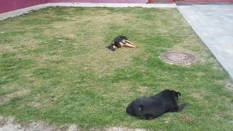 Погода притормозила строительство саратовского приюта для собак