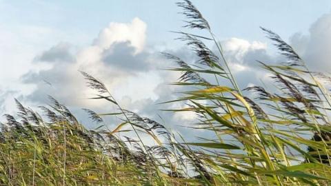 Тепло не покинуло Саратов, но ветер усилился