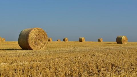 Неизвестный сжег 12 тонн сена в Ровенском районе