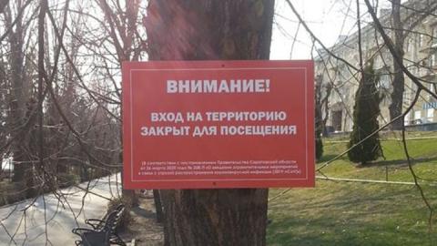 На набережной Саратова аншлаги прикрутили к деревьям саморезами