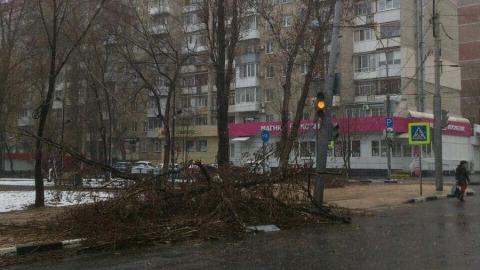 Упавшее дерево оборвало провода у Городского парка