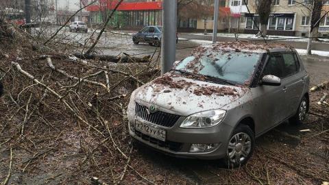 Упавшее на Советской дерево чудом никого не зацепило