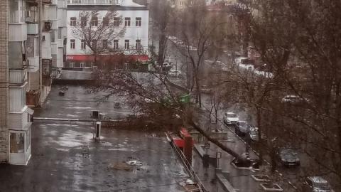 Накрывшая Саратов метель вырывает деревья с корнем