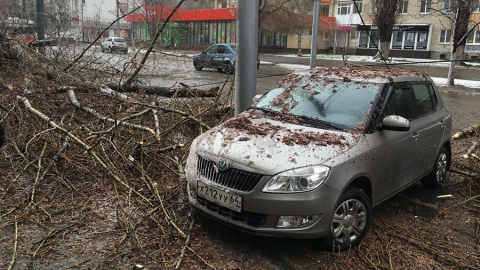 Ураган повалил 26 деревьев в Саратове