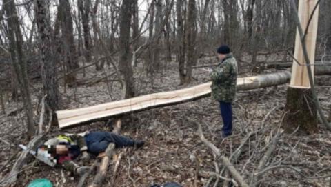 Рабочего убило спиленное дерево