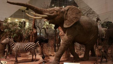Музеи и зоопарки признаны пострадавшими от коронавируса