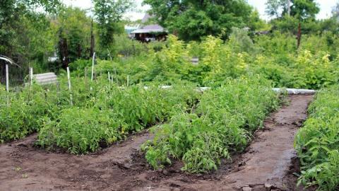 В Саратовской области разрешили продавать рассаду