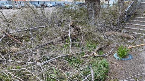 Саратовцев возмутило уничтожение цветов и деревьев в Заводском районе