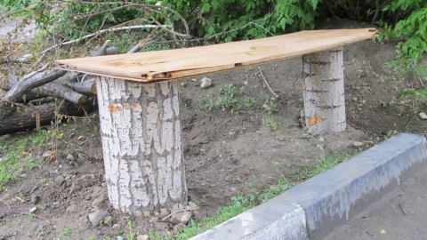 Вырубленные тополя в Саратове превратились в скамейки