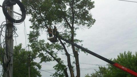 Полиция перекрыла движение из-за опиловки деревьев