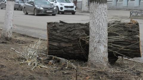 Прокуратура Саратова обнаружила многочисленные нарушения при спиле деревьев