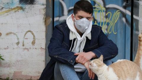 В России кошка заболела коронавирусом