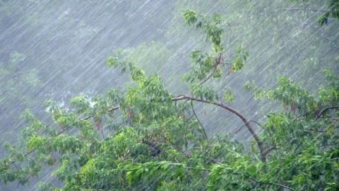 Саратовцев ждет легкий дождь и туман с утра