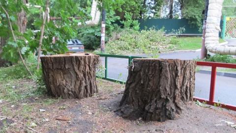 В Заводском районе продолжают расправляться с деревьями