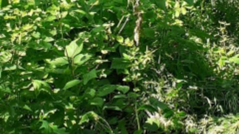 В Ивантеевке полицейский случайно нашел в кустах труп