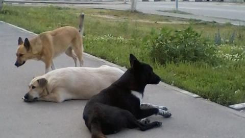 В Заводском районе собаки просят еду прямо у дверей «Магнита»
