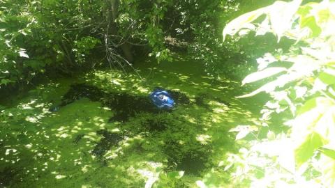 Балаковский дачник обнаружил в озере труп