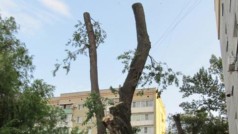В Саратове продолжается варварская опиловка деревьев
