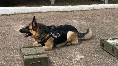 В Саратовской области служебные собаки помогли раскрыть 115 преступлений