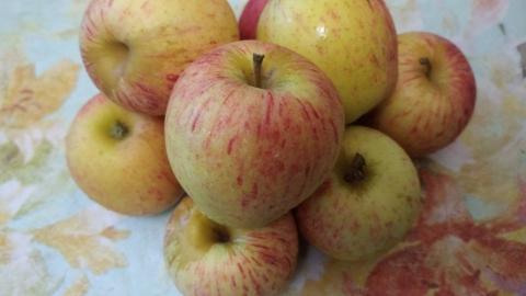 В Саратовской области продаются яблоки из Ирана, Сербии, Чили и Аргентины
