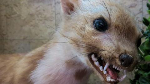 Ветеринары разобрались с 10 очагами бешенства