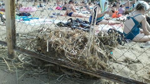 Энгельсский пляж: сухой камыш и водоросли