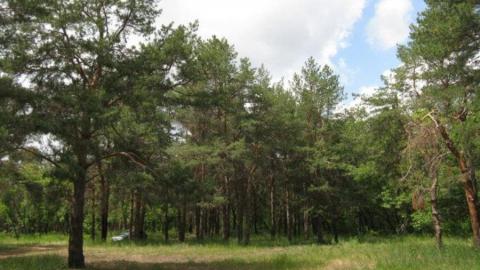 Саратовцам запретили ездить в леса