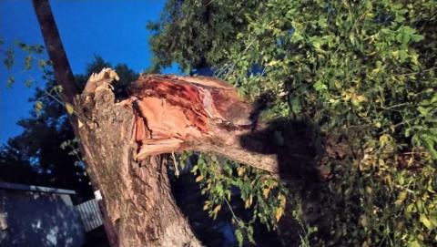 Следственный комитет заинтересовался падением дерева в Ртищеве