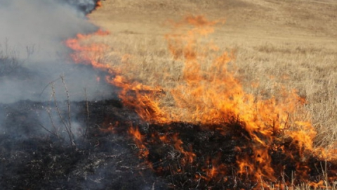 Во время степного пожара сгорел пастух