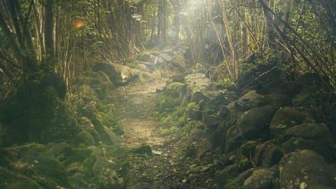 Саратовцев просят не ходить в леса под угрозой штрафа