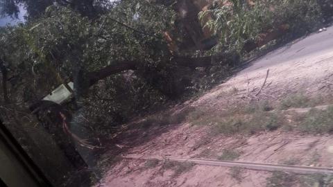 Игнорируемое властями опасное дерево, как и предсказывали местные жители, упало на трамвайные пути