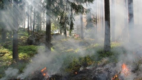 Штраф за костер в лесу увеличен в два раза
