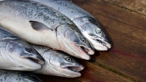 В Саратовской области изъята 21 партия опасной рыбы
