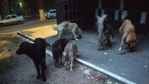 Жители Заводского прячутся от бродячих собак