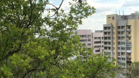 «Зеленая» комиссия обсудила судьбу саратовских деревьев