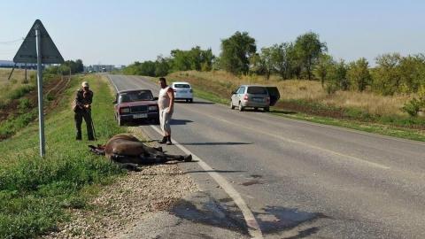 Сбитая на дороге в Дубки лошадь борется за жизнь