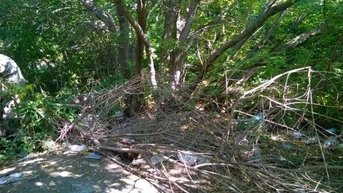 Горожанин обратился к администрации с требованием убрать пожароопасный мусор за 83-й школой