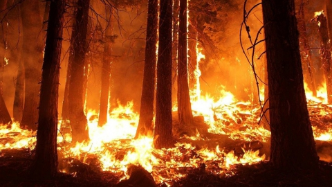 100 гектаров леса тушили больше полутора суток