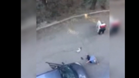 Хозяина напавшего на саратовскую пенсионерку алабая нашла полиция
